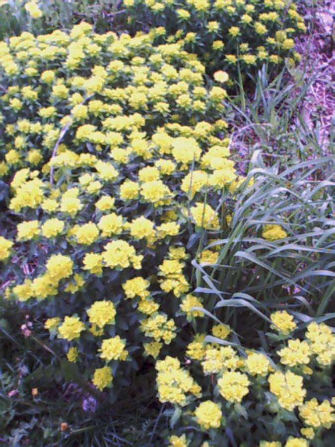 nhmomsflowers.jpg