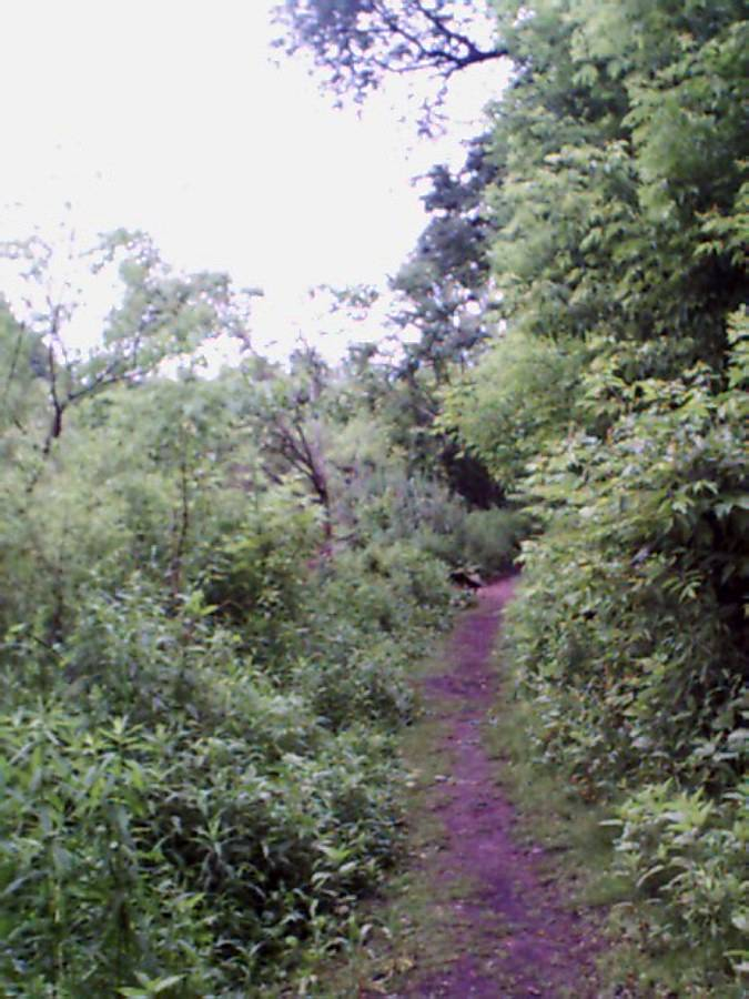 hike-greenway3-path.jpg