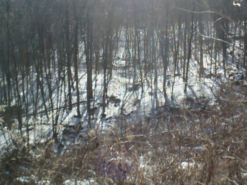 ring-trail-panorama-jan2003.jpg