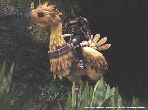 tayr-chocobo-regal-11-17-05.jpg